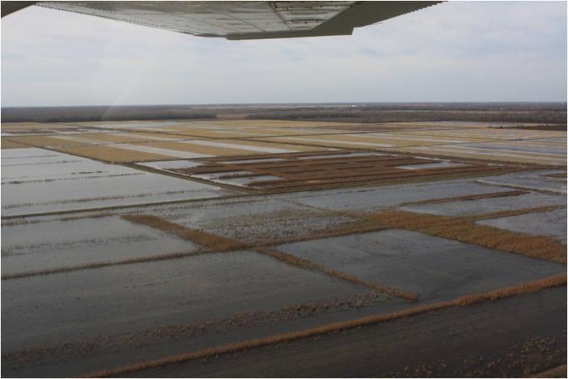Duck Aerial Survey