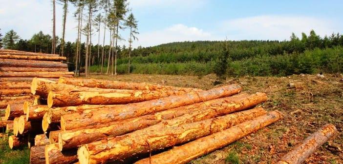 Timberland Pic