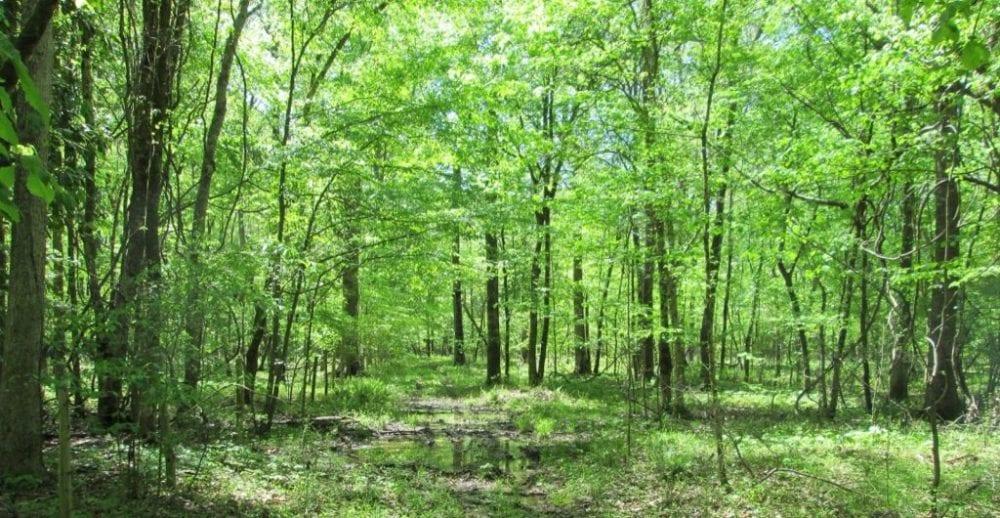 2 Bottomland Hardwoods 1024x530 1