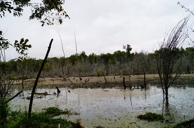 23 River Sloughs