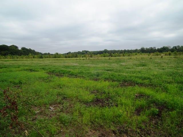 27 Moist Soil Grasses