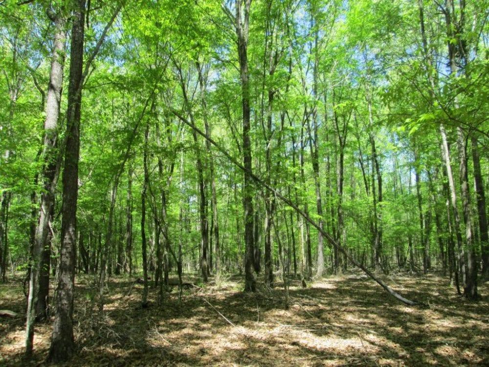 4 Upland Hardwoods 1024x768 1
