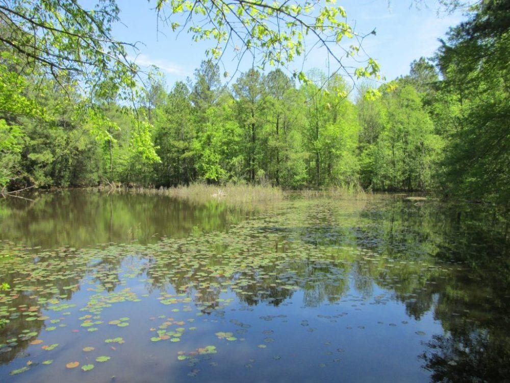 8 Pond 1024x768 1