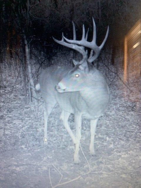 Argyle Trail Cam Deer 1 e1554326391900
