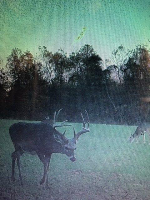 Argyle Trail Cam Deer 2 e1554326373662