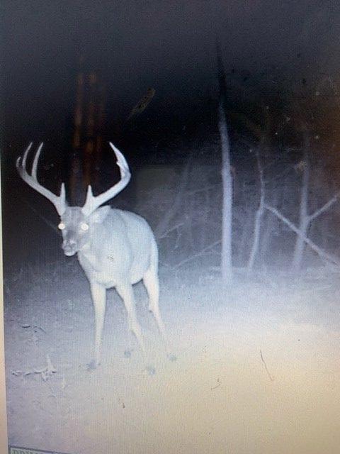 Argyle Trail Cam Deer e1554326357357