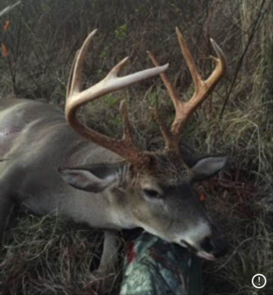 Buck 2 2 947x1024 1