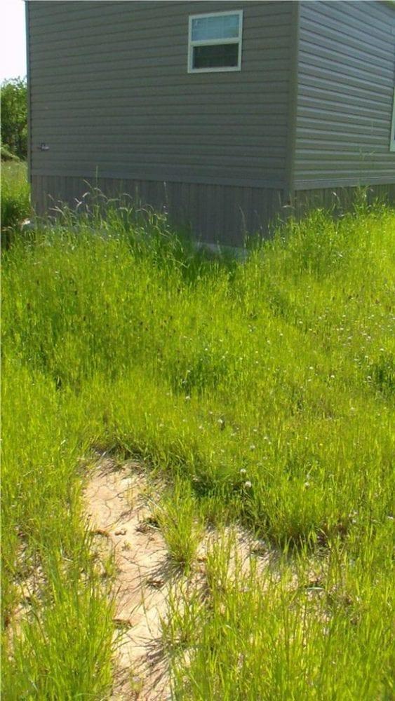 Utica 372 Deer Tracks by Mobile Home 576x1024 1