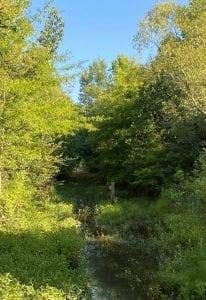 Creek Pic 704x1024 1
