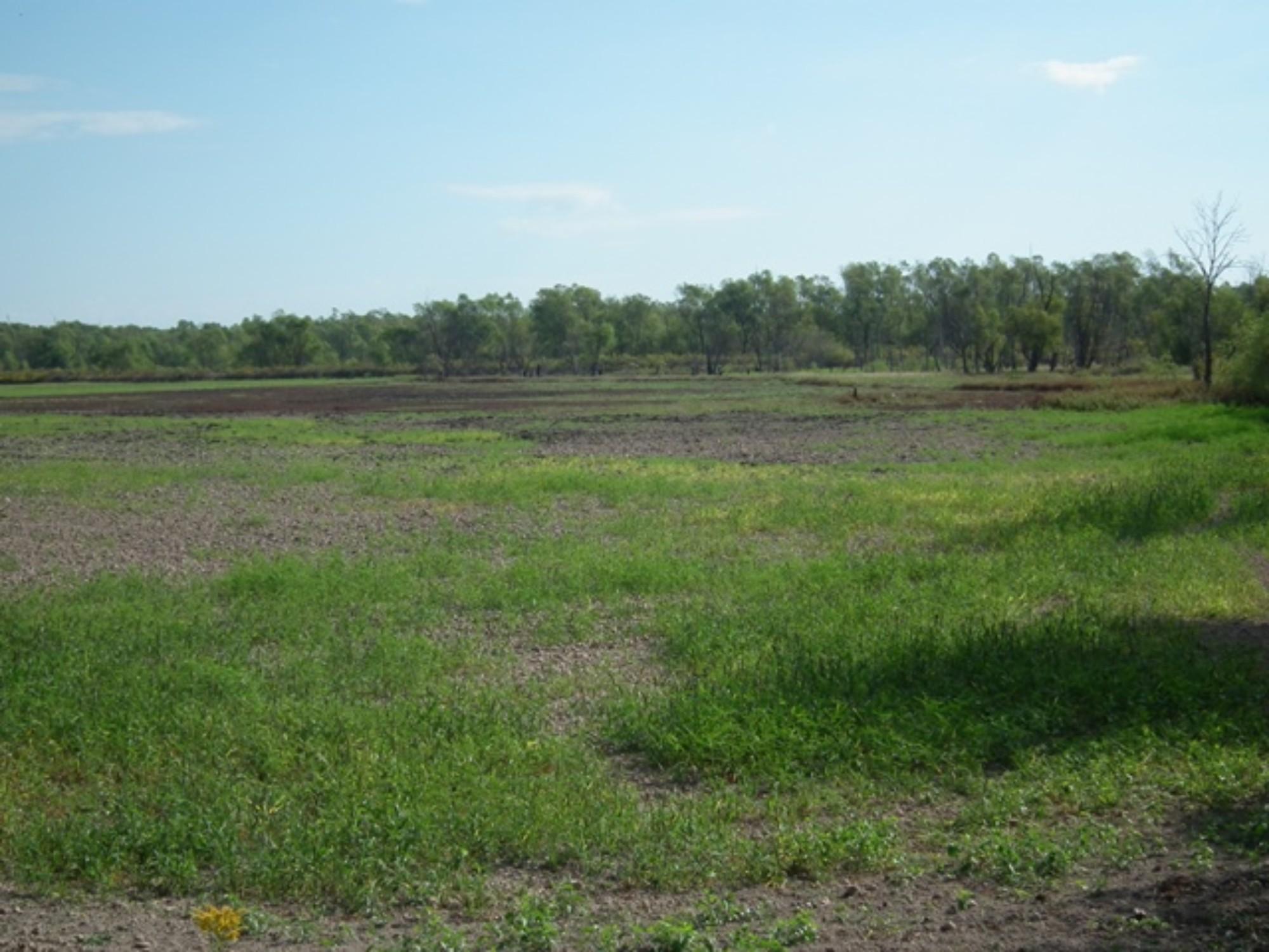 20 Duck Impoundment with Millet