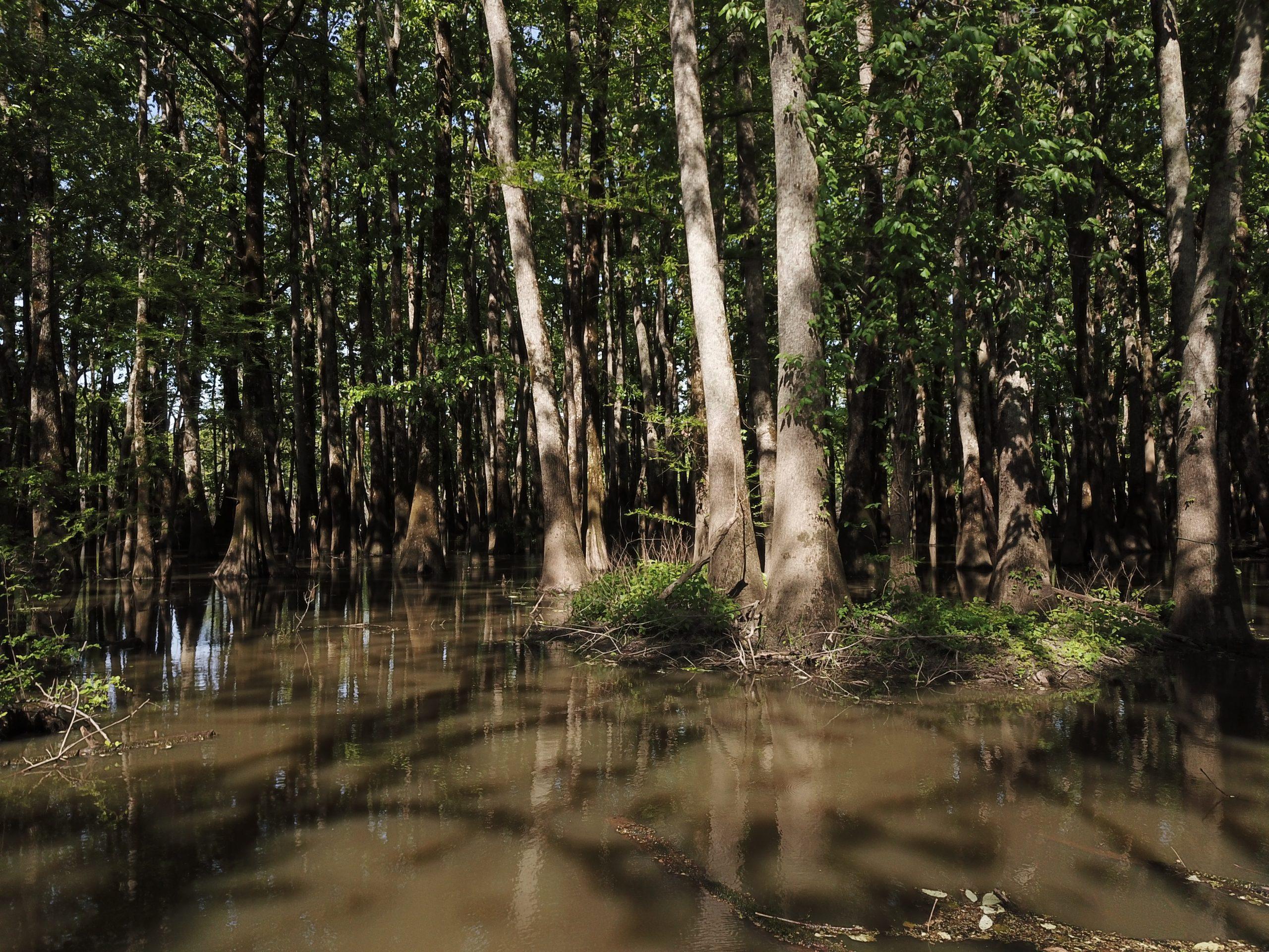 Benson-Brake-trees-water